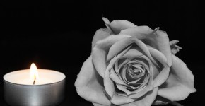 rose-1273740_960_720